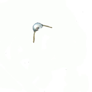 Odznak AÈR hodnost pecka støíbrná lesklá 8mm